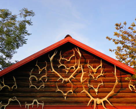 Cabin and Antlers
