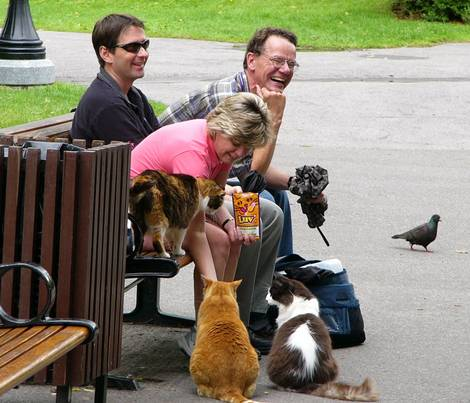 Stray cats of Parliament Hill (Canada) 1 of 3