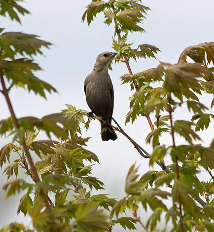 Spring 2009 Bird ID Thread.