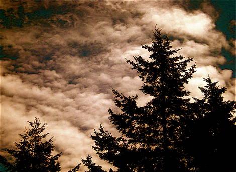 cloudtrees