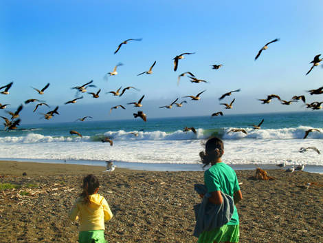 Flock_of_seaguls1