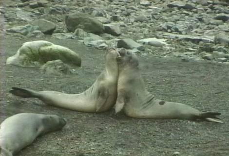 Photos from Antarctica