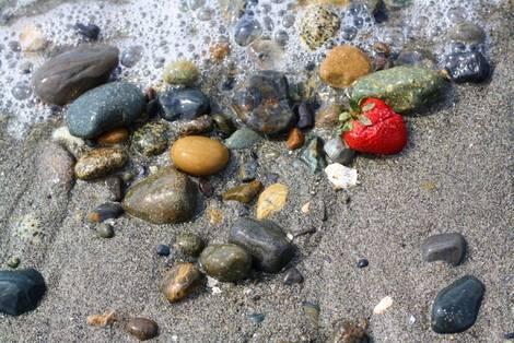 Shore Strawberry