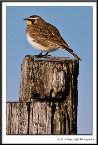 FALL 2010 Bird ID