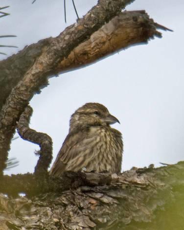 SPRING 2010 Bird ID Thread