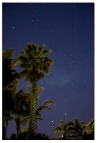 Night_Palm