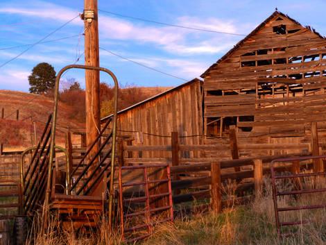 Barn and Loading Chute