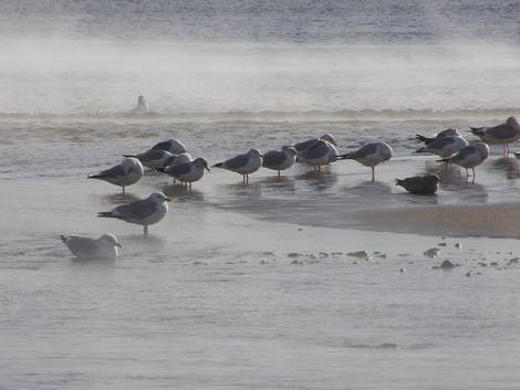 Cooling Pond- 2