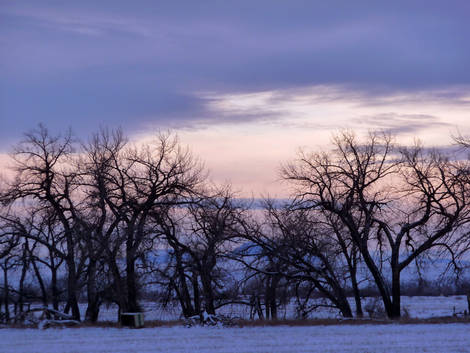 Winter Cottonwoods