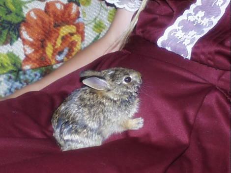 Halloween Rabbit