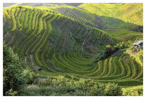 Rice Terrace by Richard Hla