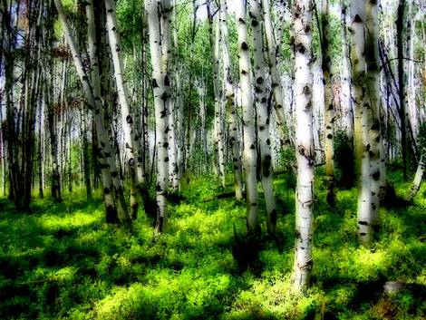 Aspen Grove - State Forest Park, CO
