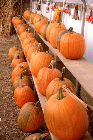Weekend Aventures:pumpkin patch and cooking outdoors