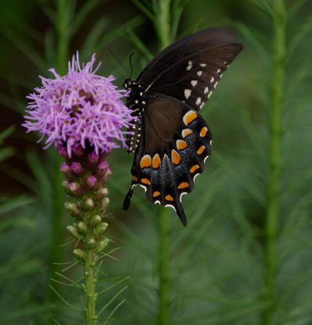 Garden Variety Butterfly