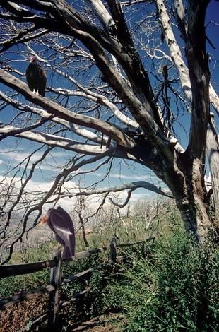 Evil Tree?