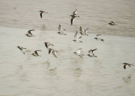 More Egret and Oyster catchers