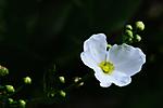 1_White_flower.jpg