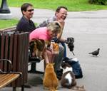 236735Stray_cats_of_Parliament_Hill_Canada_1.jpg