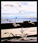 238746Hungry_Seagulls.JPG