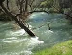 238896Roarin_creek.JPG