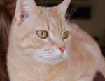 246513clear_cat_resize.jpg