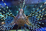 Asheville-Aquarium.jpg