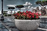 Begonias_of_Rome.jpg