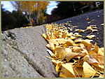 Fall_X1.jpg