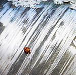 LadyBug-On-Pipe.jpg