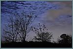 Moonlight_night.jpg
