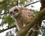 Owl_5.jpg