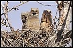 Owl_Update_005sm.jpg