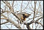 Owlin_flight005.jpg