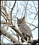 Owlin_flight007.jpg