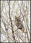 Owlin_flight010.jpg