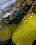 Rock_Moss-4.jpg