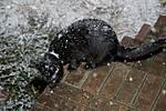 Snow_10-02-15-008PR.jpg