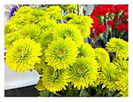 Soquel_Ride_Finds_019_colorful.jpg