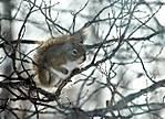 Squirrel_in_tree_edited.jpg