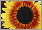 Sunflower_EXP3.jpg