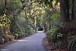 The_Forest_of_Nisene_Marks_A3.jpg