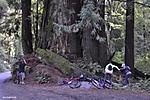 The_Forest_of_Nisene_Marks_A4.jpg