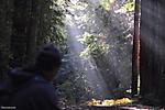The_Forest_of_Nisene_Marks_Mystic.jpg