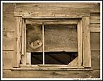 Window-0002.jpg