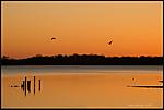 bird-on-lake.jpg