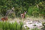 deer_800_web.jpg