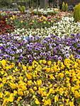 en_ST700_02_Flower_bed.JPG