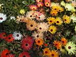 en_ST700_04_Flowers.JPG