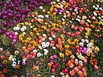 en_ST700_06_a_colorful_display_of_flowers.JPG