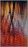 geese_in_my_pond.jpg